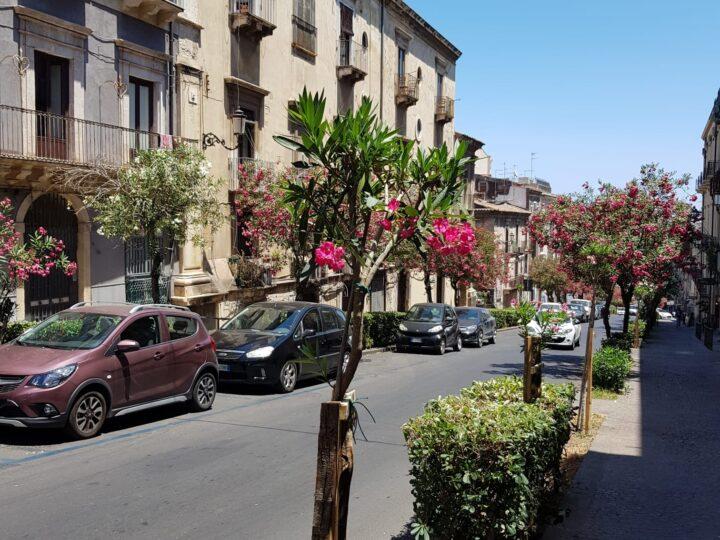 """Verde: completata la piantumazione del progetto """"2000 alberi per Catania"""", pronte altre iniziative green"""